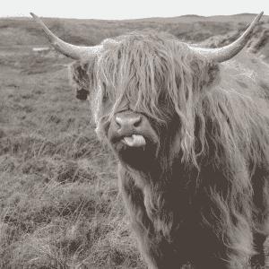 tuinposter highlander