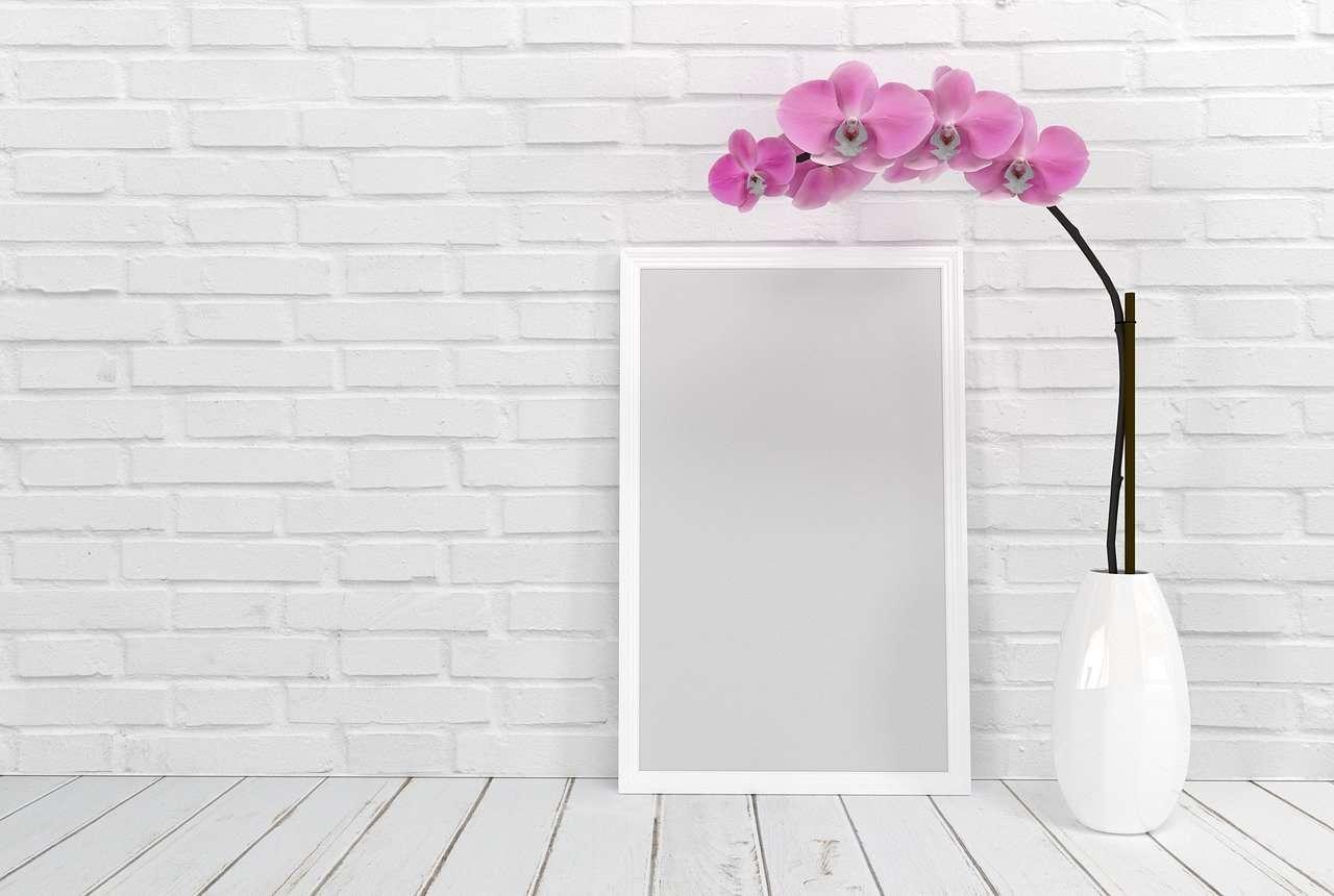 orchidee in je huis