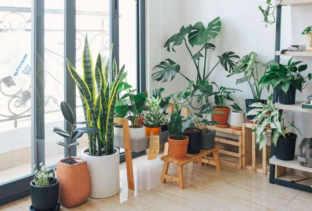urban jungle planten