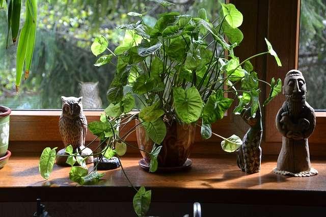 planten vensterbank