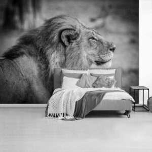 fotobehang leeuw